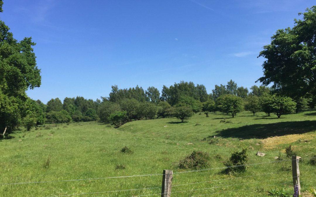 Blick ins Naturschutzgebiet Höltigbaum in Hamburg-Rahlstedt