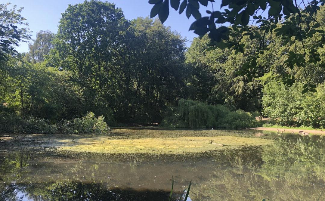 Lehmkuhle im Greifenberg-Park in Oldenfelde (Hamburg-Rahlstedt)