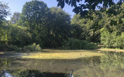 Lehmkuhle im Greifenberg-Park wird entschlammt