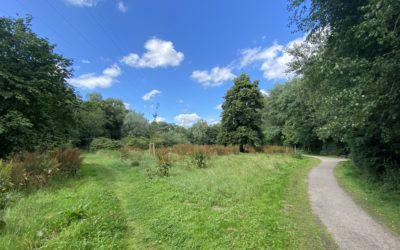 Oldenfelder Bürgerpark wird öffentliche Grünfläche