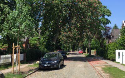 85 neue Straßenbäume für Rahlstedt, Oldenfelde und Meiendorf
